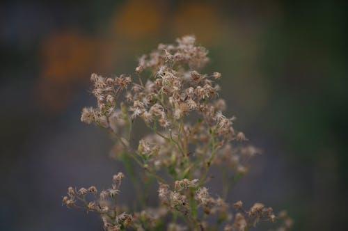 Free stock photo of closeup, macro, wild plant
