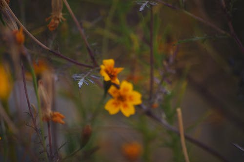 Free stock photo of flower, macro photography, wild flowers