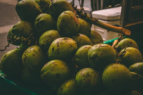 Free stock photo of coconut, fruit, summer