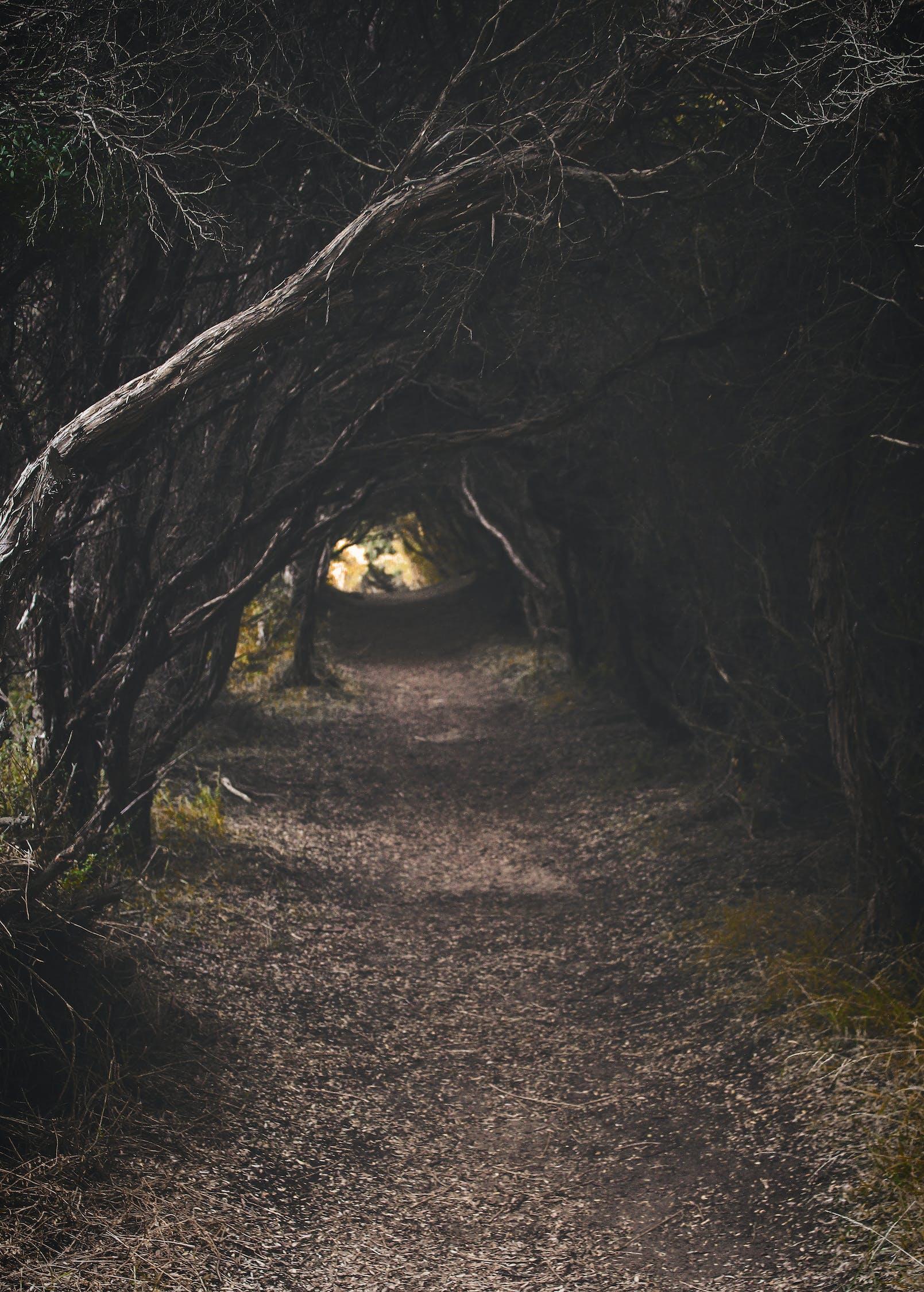Tree Pathway