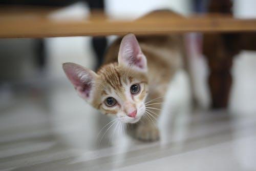 Free stock photo of animal, baby, blur