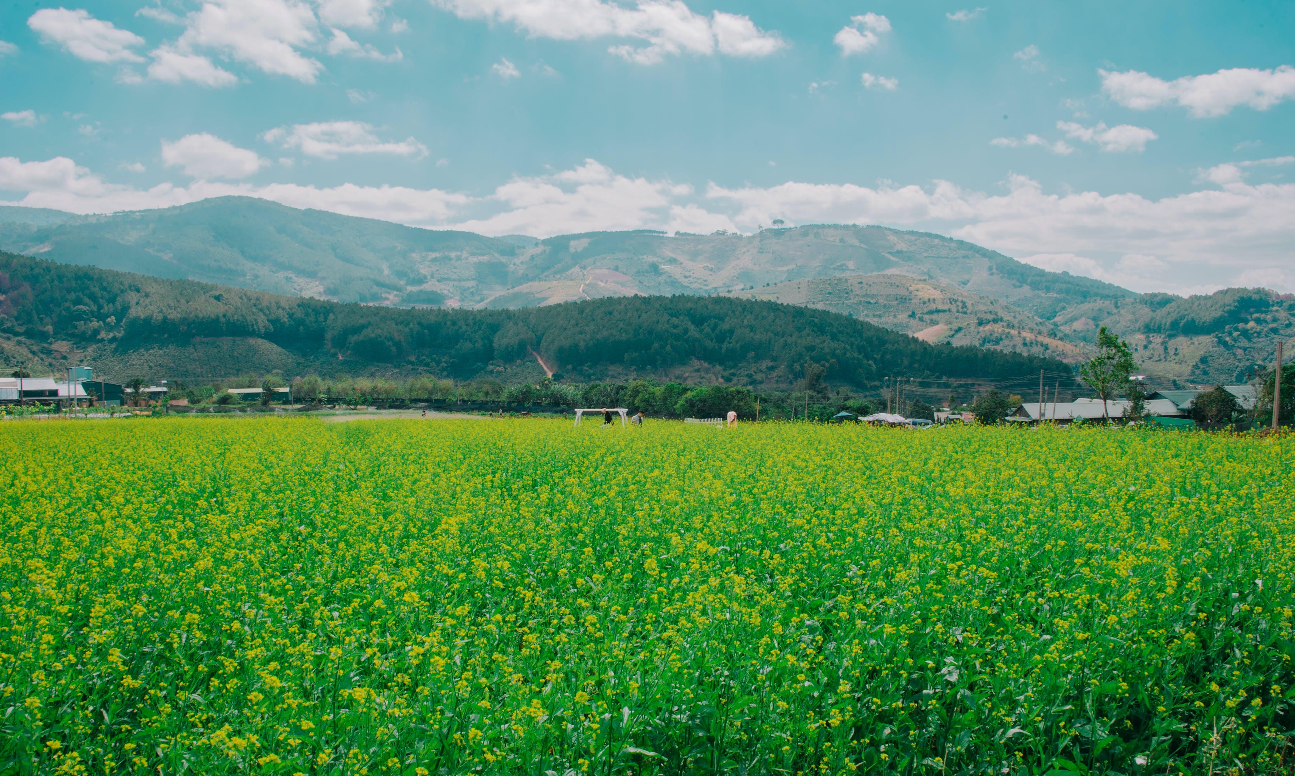 Imagine de stoc gratuită din câmp, fermă, iarbă, în timpul zilei