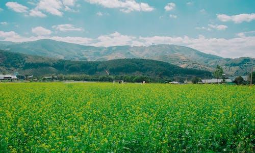Kostnadsfri bild av bergen, bondgård, dagtid, fält