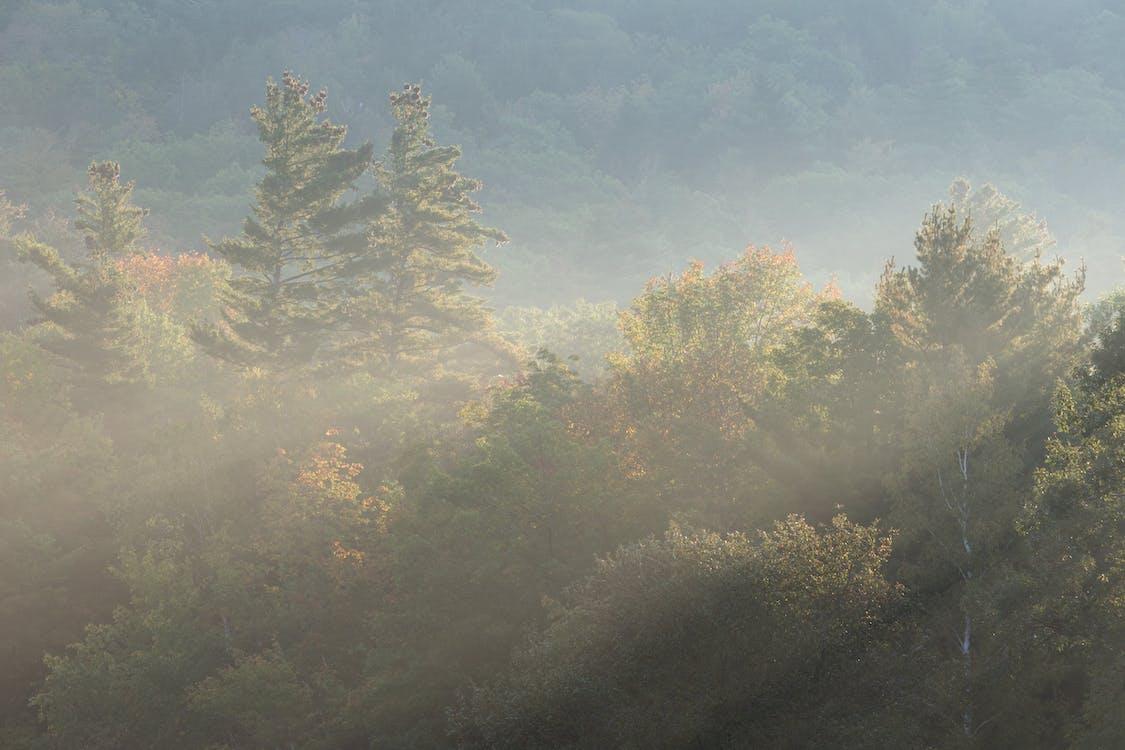 Денне світло, дерева, ліс