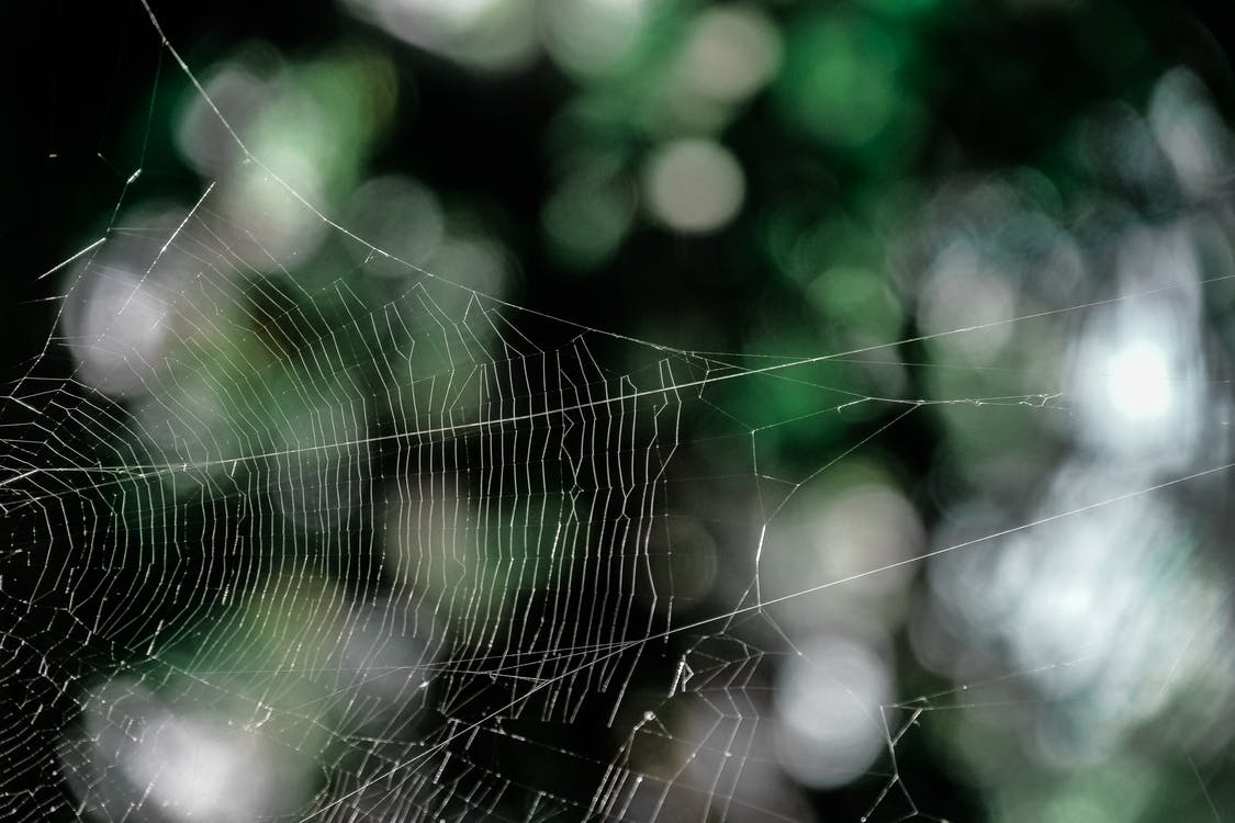 White Spider Web in Selective-focus Photography