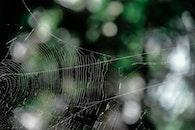 pattern, macro, cobweb