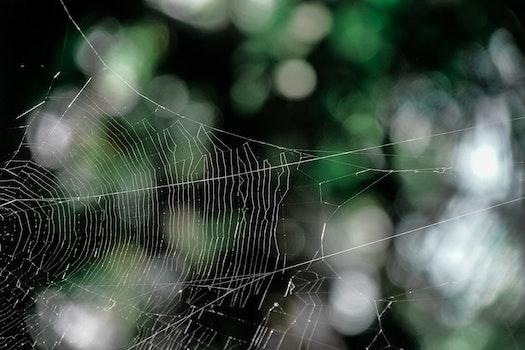 Free stock photo of pattern, macro, cobweb, spider's web