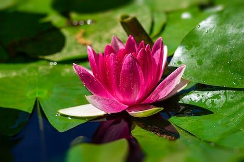 Foto profissional grátis de flor, floração, florescência