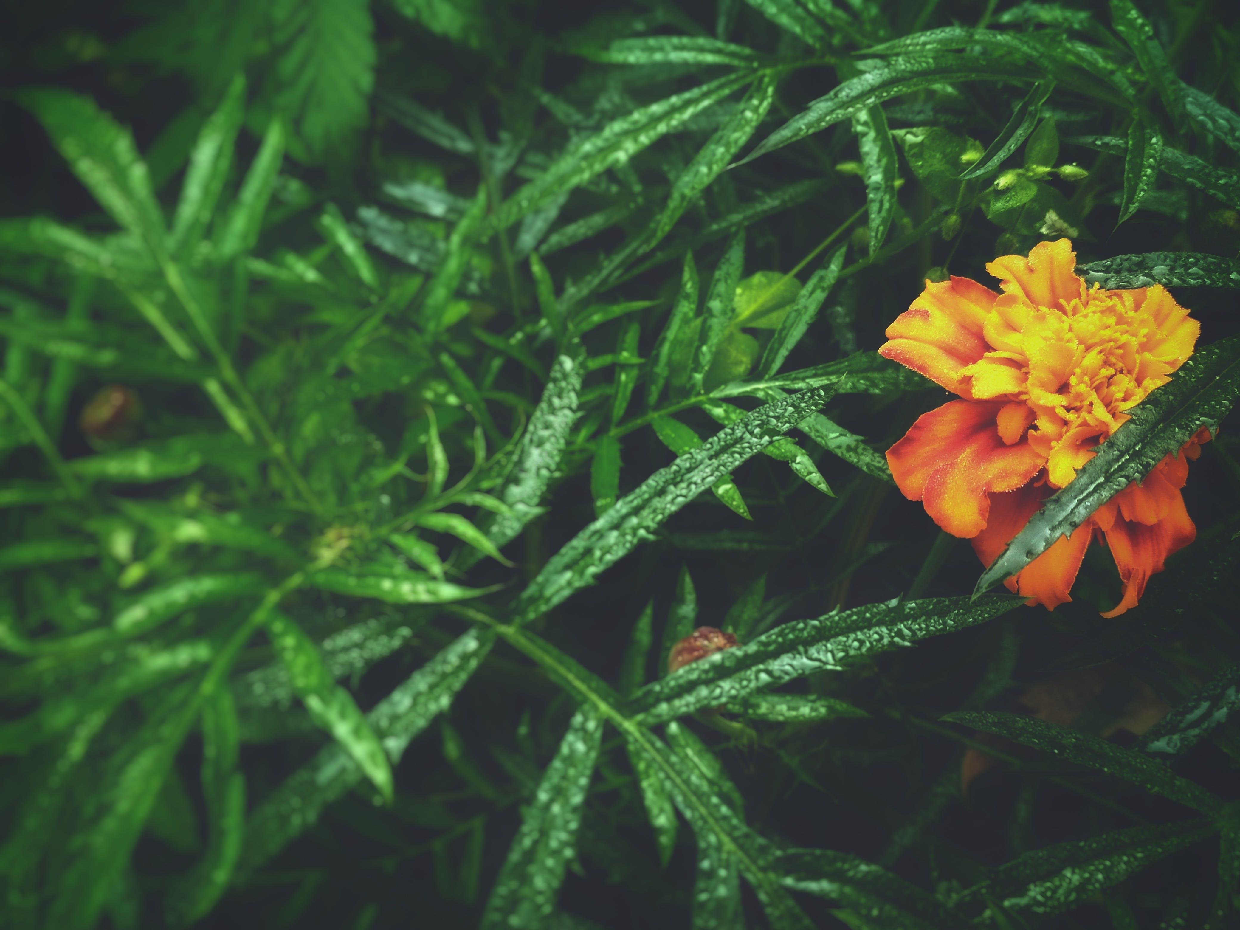 Δωρεάν στοκ φωτογραφιών με #ayanclicks, #filters, #leafes, #mobilechallenge