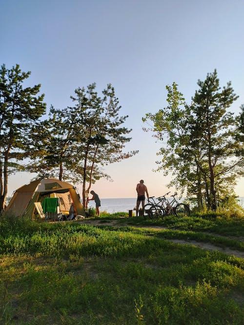 Imagine de stoc gratuită din arbori, biciclete, camping