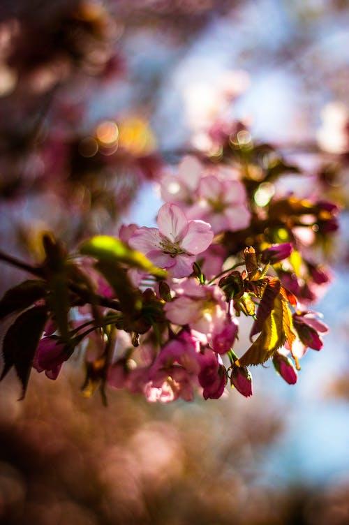 Fokusfotografie Von Rosa Blütenblättern