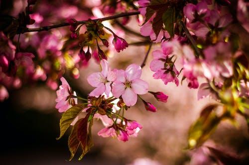 Rosa Blume Mit 5 Blütenblättern In Nahaufnahmefoto Tagsüber