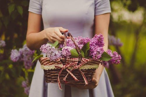 Immagine gratuita di cestino, cesto di fiori, donna, fiori