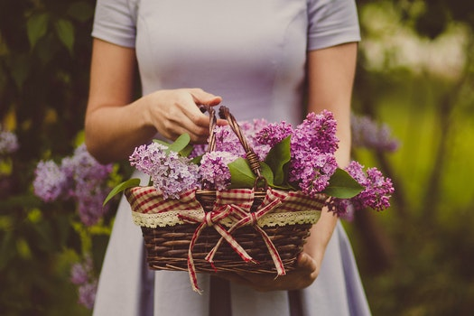 Woman Carrying Purple Flowers