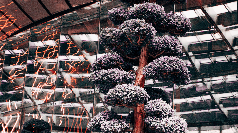 Darmowe zdjęcie z galerii z drzewo, gałęzie, roślina