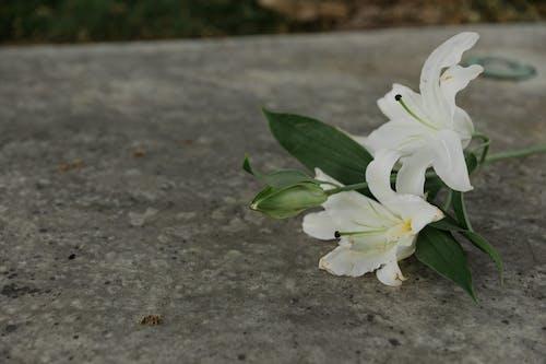 Ảnh lưu trữ miễn phí về bề mặt bê tông, cận cảnh, hoa