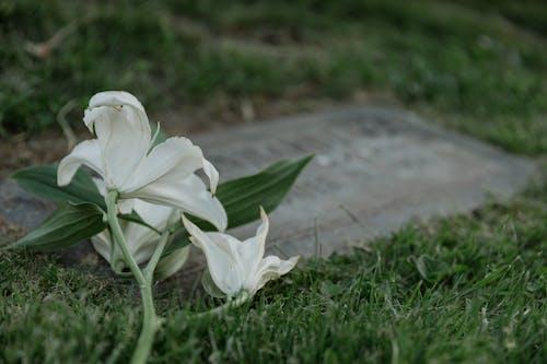 Ảnh lưu trữ miễn phí về bia mộ, cận cảnh, cỏ