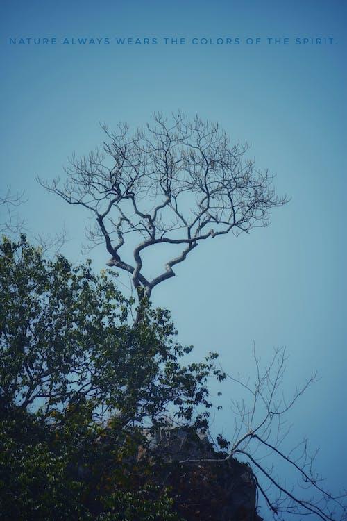 Gratis stockfoto met dode bomen, natuur, natuurfotografie