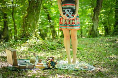 Immagine gratuita di alberi, boschi, bouquet, coperta