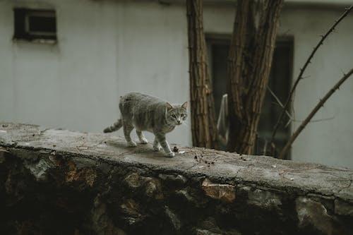 Бесплатное стоковое фото с животное, кошачьи, кошка