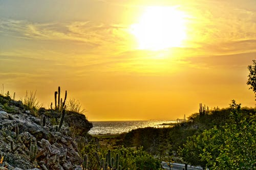 Free stock photo of beach, cactus, golden sun, green