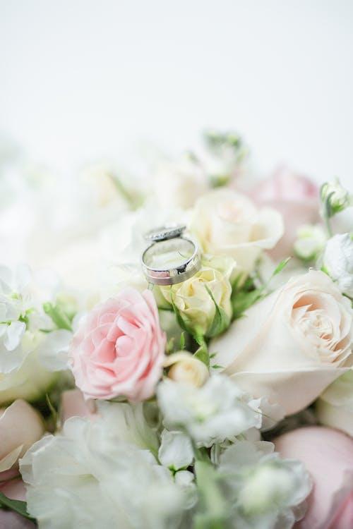 Foto profissional grátis de anéis, argolas, bandas de casamento