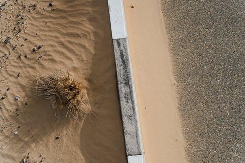 Brown and White Sunflower on Brown Sand