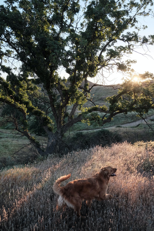 Short-coated Tan Dog on Grass Field Near Tree
