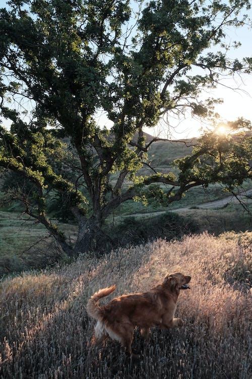 Immagine gratuita di albero, animale, animale domestico, cane