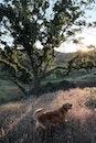 nature, animal, dog