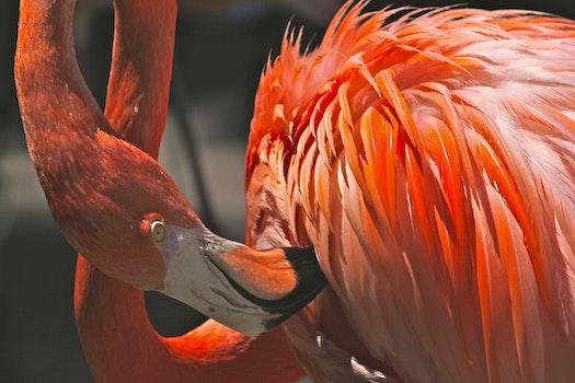 Orange and White Feathered Bird