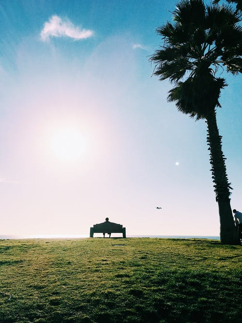 Darmowe zdjęcie z galerii z drzewo, niebo, ocean, słońce