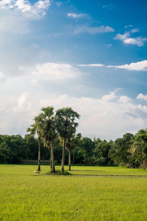 Gratis stockfoto met bomen, gras, idyllisch