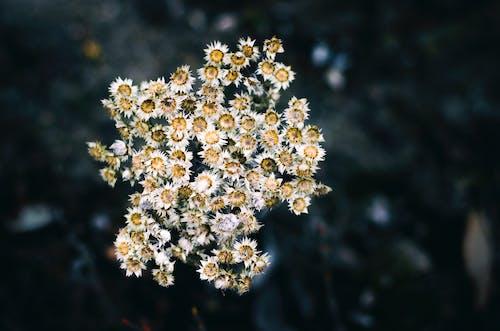 คลังภาพถ่ายฟรี ของ กลีบดอก, ดอกไม้, พฤกษา, พืช