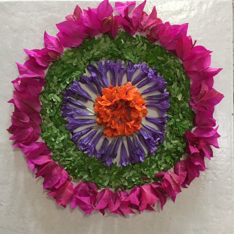 Free stock photo of flower bed, flowers, onam