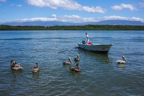 Free stock photo of blue sky, boat, fisherman
