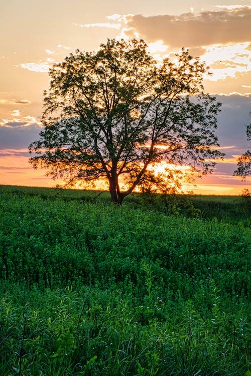 フィールド, フローラ, 光の無料の写真素材