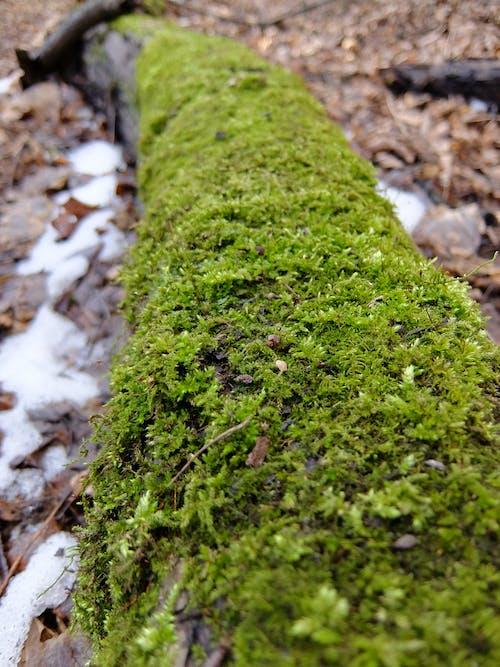 Бесплатное стоковое фото с мох, упавшее дерево