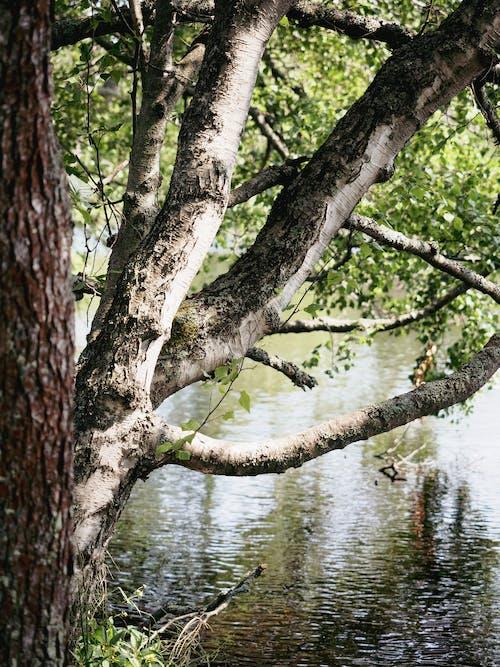 Brown Tree Trunk on Water