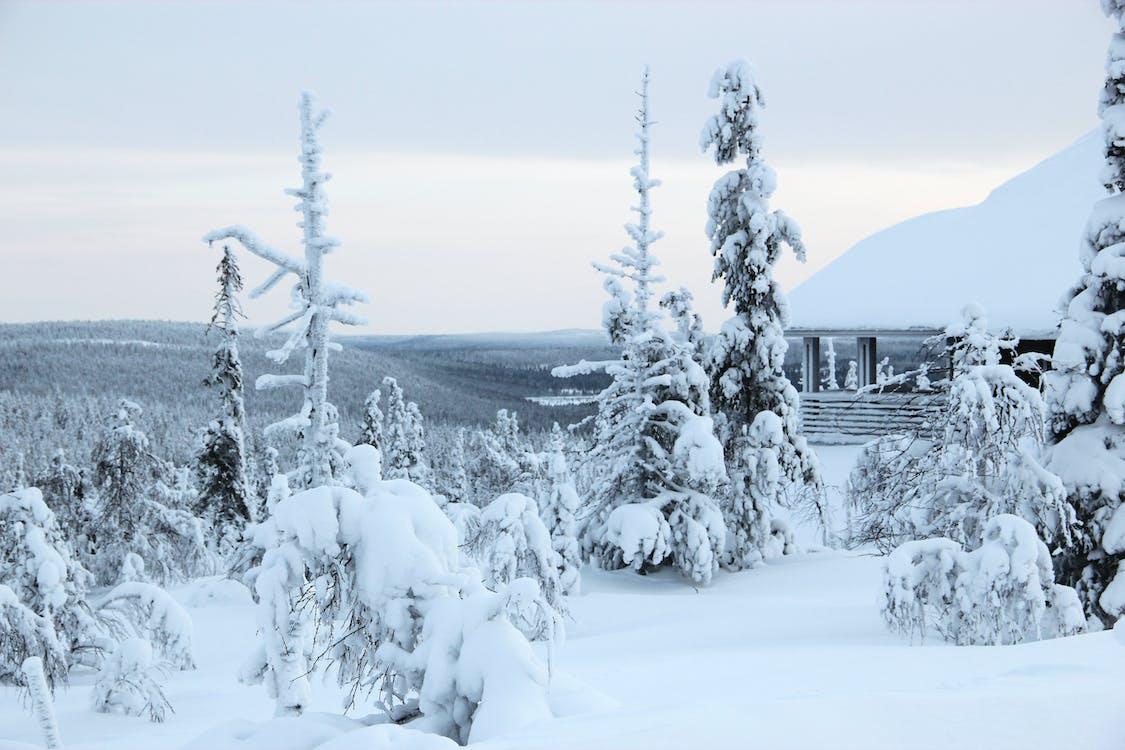 Finland, lappi, lappland