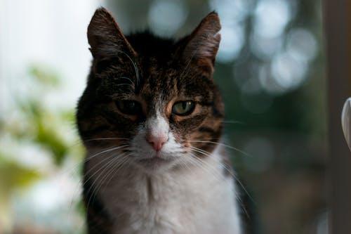 Ingyenes stockfotó cica, házi kedvenc, macska, természet témában