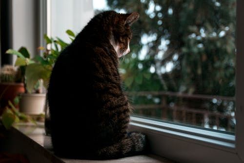 Ingyenes stockfotó cica, házi kedvenc, macska témában
