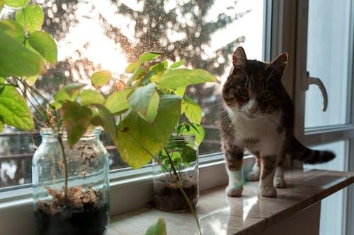 Free stock photo of animal, animals, aquatic plants, cat