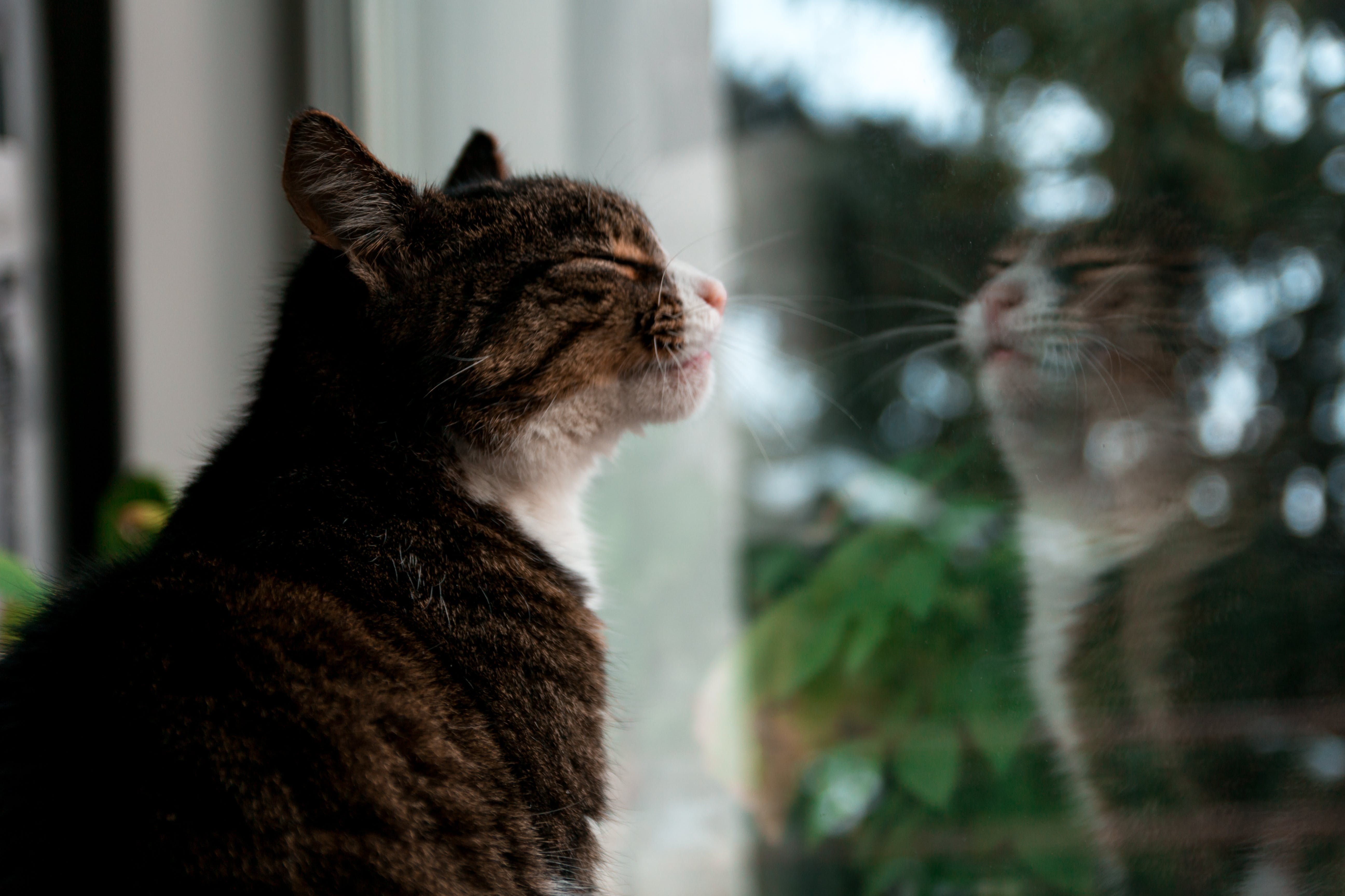 Selective Focus Photography of Brown Tabby Kitten Standing Against Glass Window