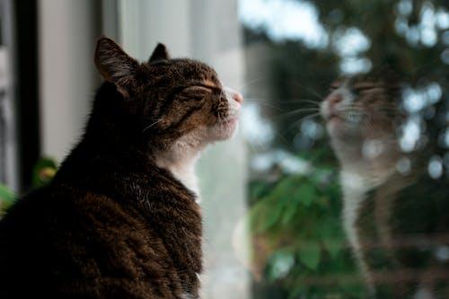Ilmainen kuvapankkikuva tunnisteilla eläin, heijastus, ikkuna, kissa