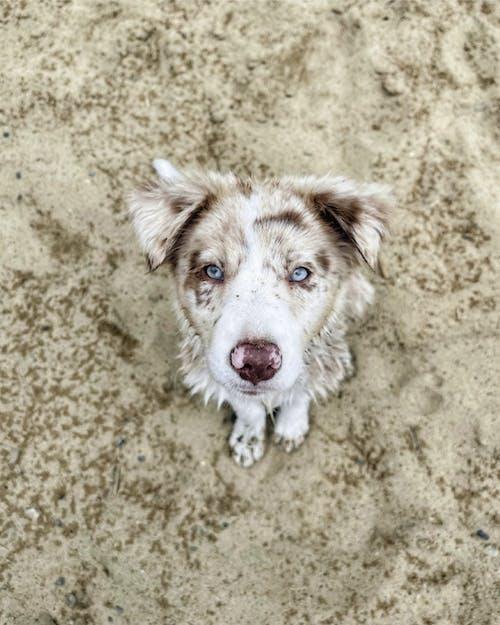 Foto stok gratis agustus, anak anjing, anak anjing yang lucu