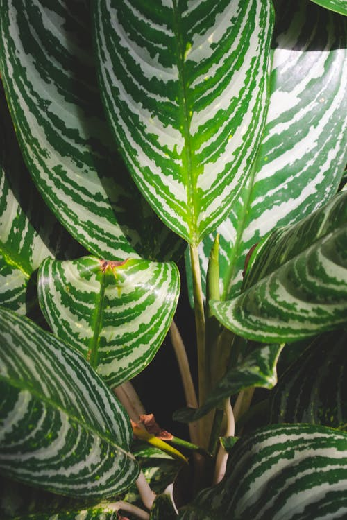 Free stock photo of green, nature, plant leaf
