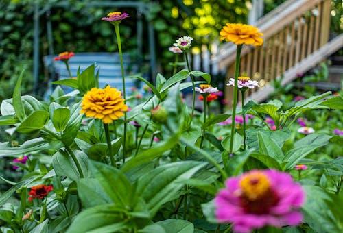 色とりどりの花, 花畑の無料の写真素材