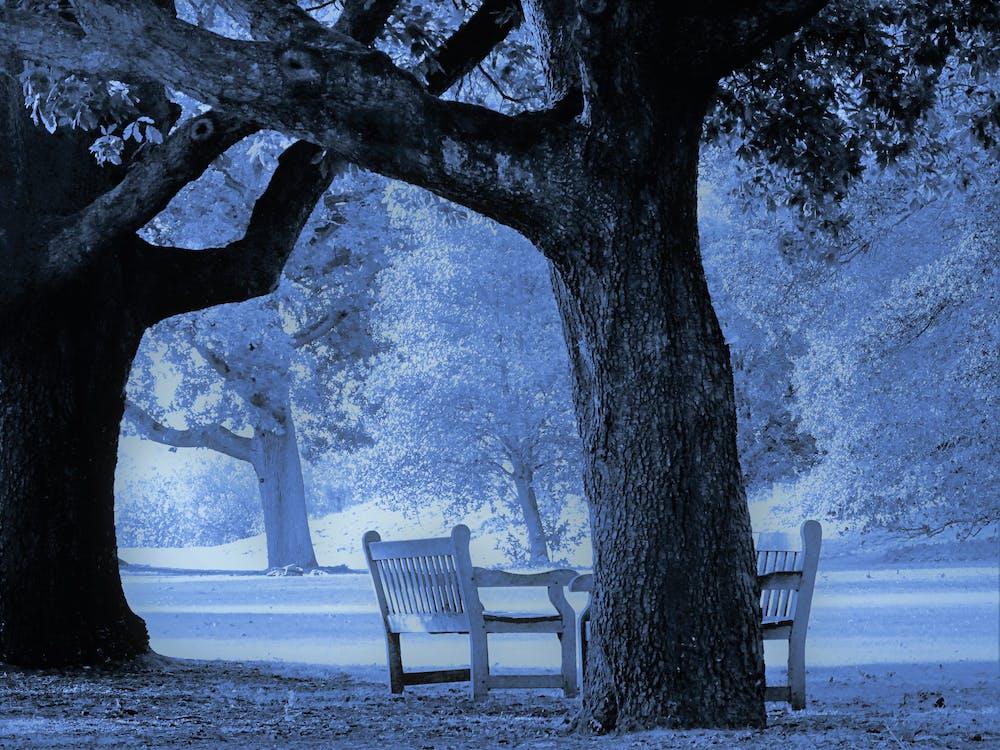årstid, benk, daggry