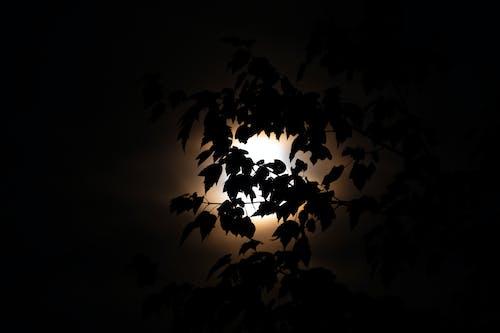 Безкоштовне стокове фото на тему «місяць, світло та тінь, тінь»